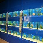 Dobbies Lisburn - Installation of internal & external aquatic systems