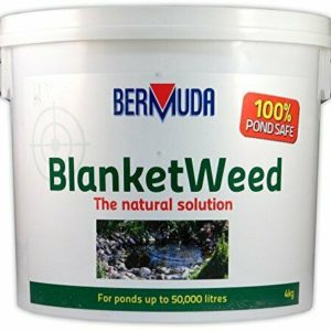 Bermuda blanketweed 4kg