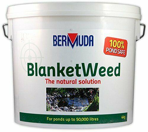 Bermuda blanketweed 4kg