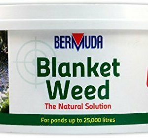 Bermuda blanketweed 2kg