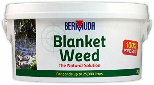 Bermuda blanketweed 2kg